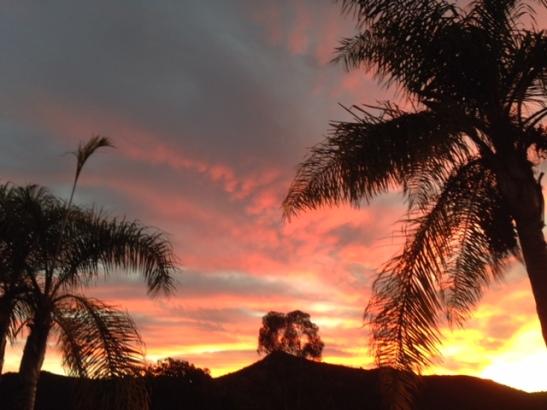 sunsethearttree